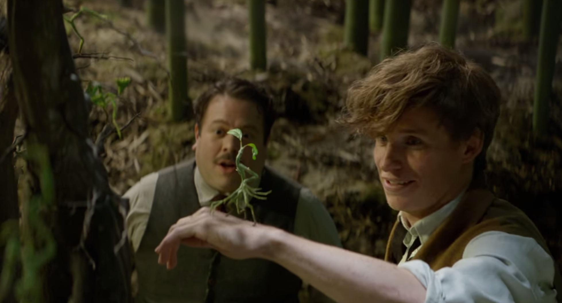 Newt Scamander lebih nyaman berinteraksi dengan binatang dibanding manusia lain.